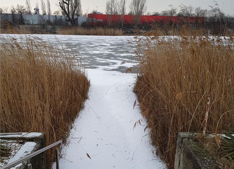 Unser Steg im Winter