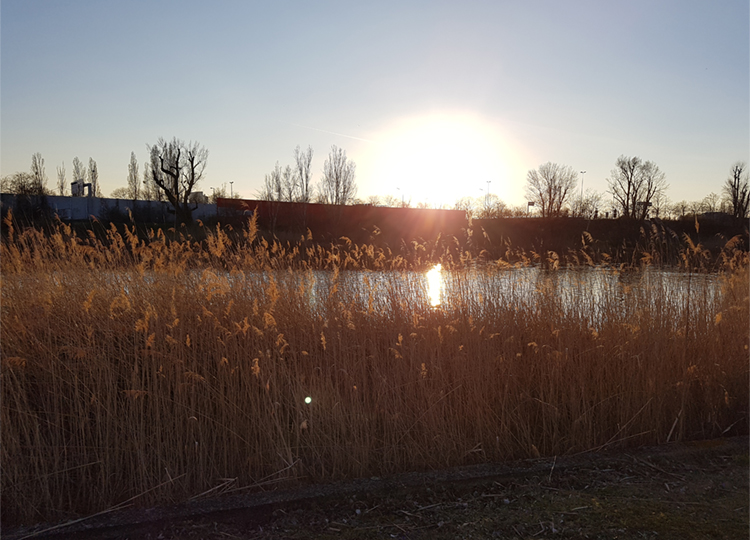 Die alte Donau im Sonnenuntergang